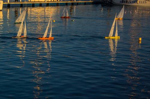 Modellbåtarna kappseglar