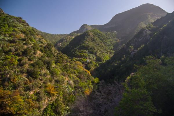 Grönskande berg