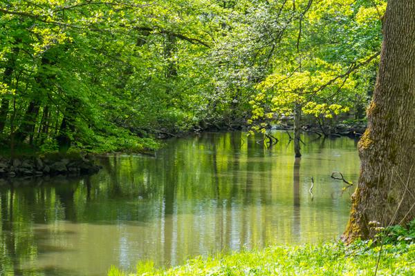 Våren i slottsskogen