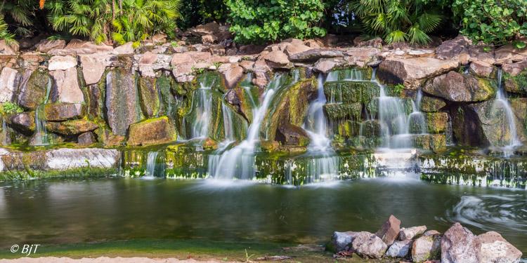 I parken Palmetum