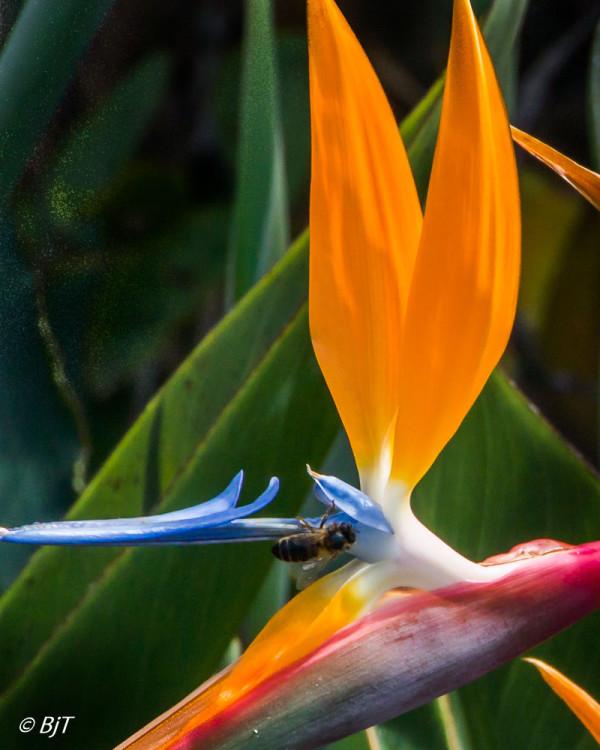 Blommor och bin