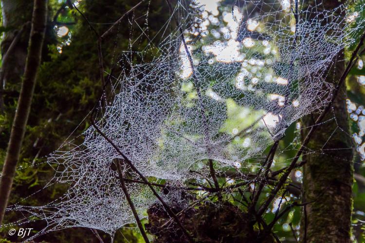 Vått för spindlarna
